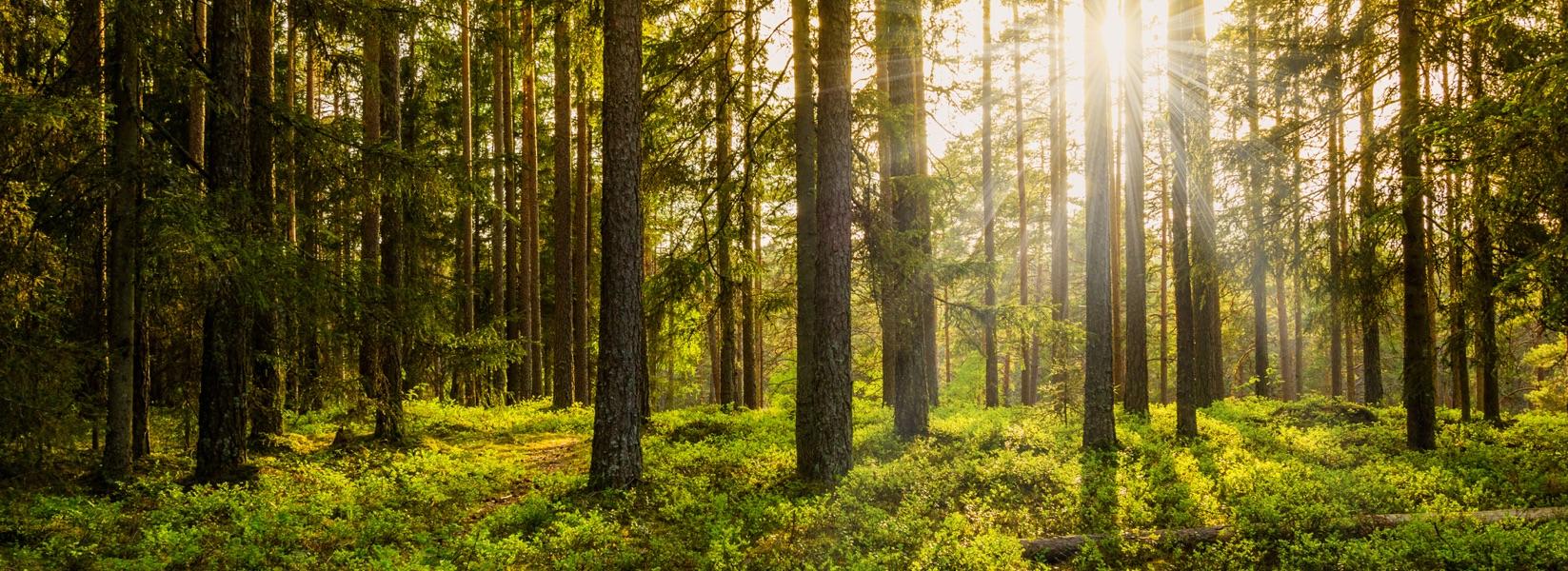 Forest   Dufferin County