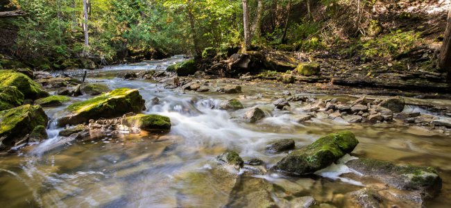 Image of flowing creek