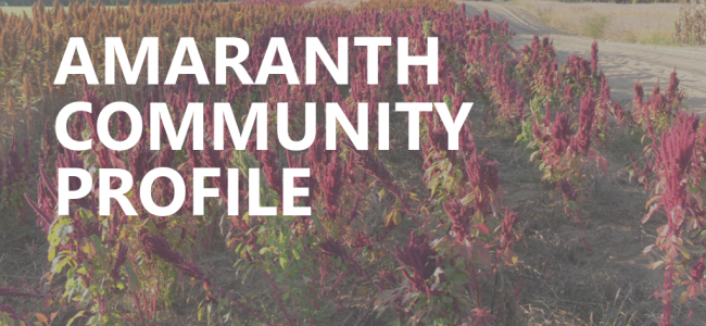 Document cover photo of amaranth